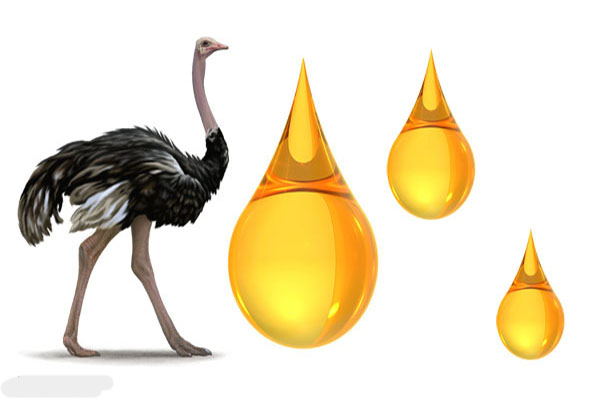 Image result for روغن شترمرغ (Ostrich oil)